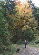 Wandelen in de Harz