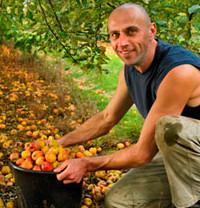 Appels verzamelen voor de cider